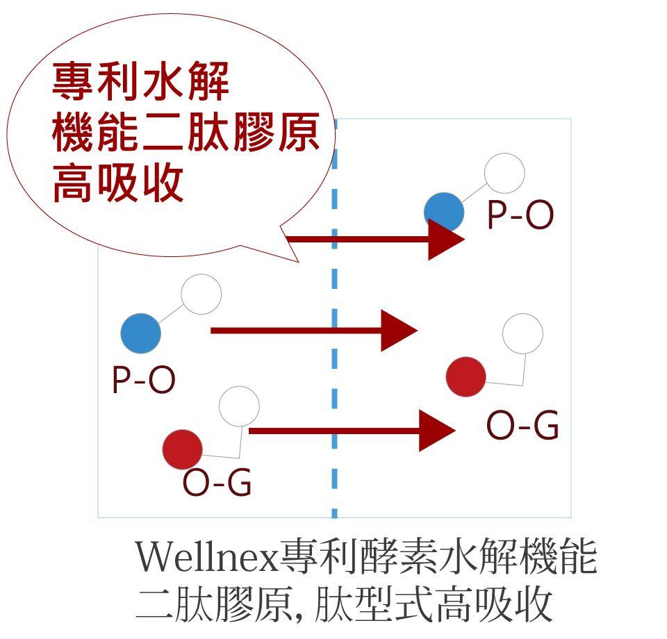 新田膠原蛋白專利二段式純化酵素水解
